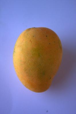 Alphonso Mango by PDPics